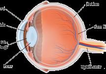 Göz Mercek Sistemi